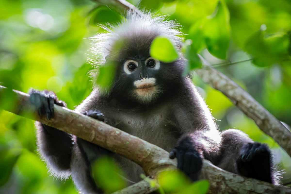 I'm a Monkey!